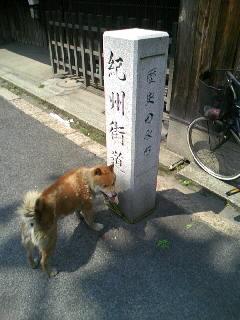 Kisyukaido20090426