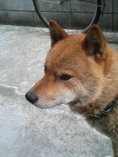Ryu20050921